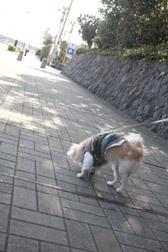 2012enoshima1.jpg