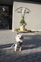 2012enoshima10.jpg