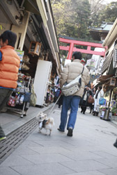2012enoshima3.jpg