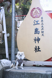 2012enoshima4.jpg