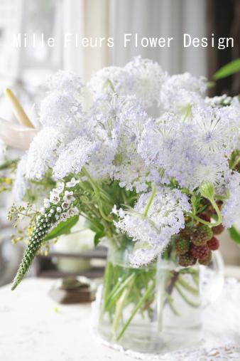 bluelaceflower.jpg