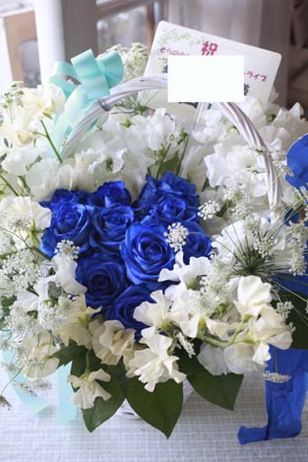 blueroseangel2.jpg