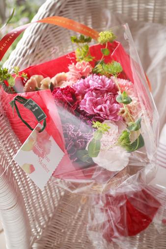 carnation.jpg