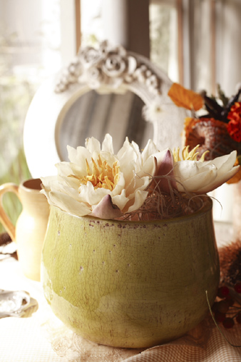 hasuiceflower.jpg