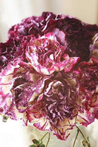 iceflowercarnation.jpg