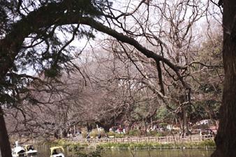 inogashira2.jpg