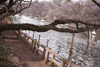 inogashira3.jpg