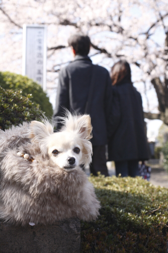 kichijouji26.jpg
