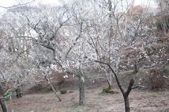 kizuna18.jpg