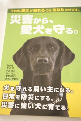 odaiba25.jpg
