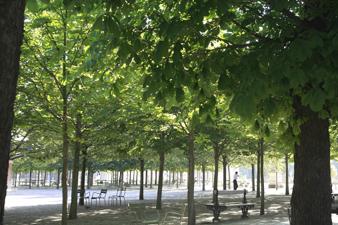 paris2012111.jpg