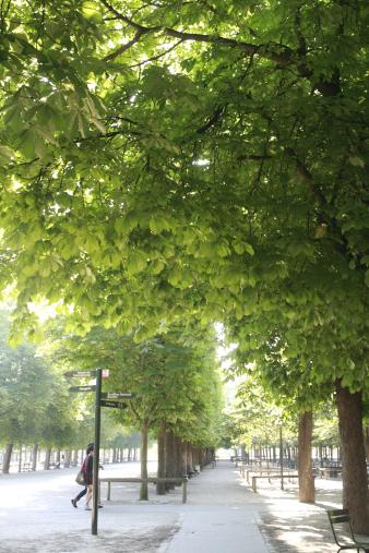 paris2012114.jpg