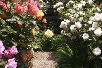 rosecafe14.jpg