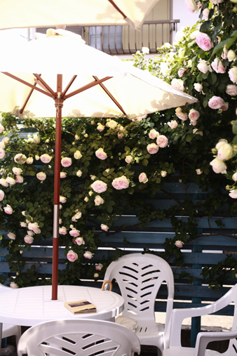 rosecafe16.jpg