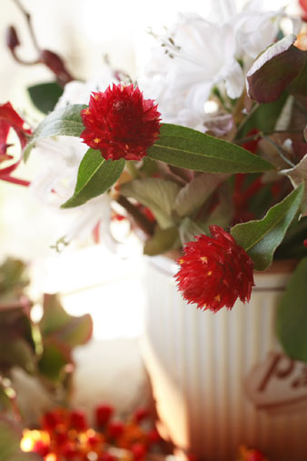 strawberryfield2.jpg