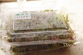 yamagoke2.jpg